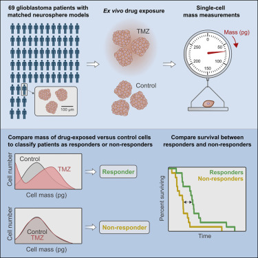 Functional drug susceptibility testing using single-cell mass predicts treatment outcome in patient-derived cancer neurosphere models
